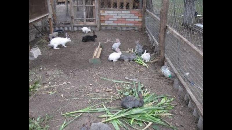Iepuri în voliera / кролики в вольере / cresterea iepurilor