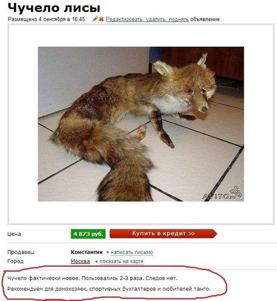продаётся чучело лисы