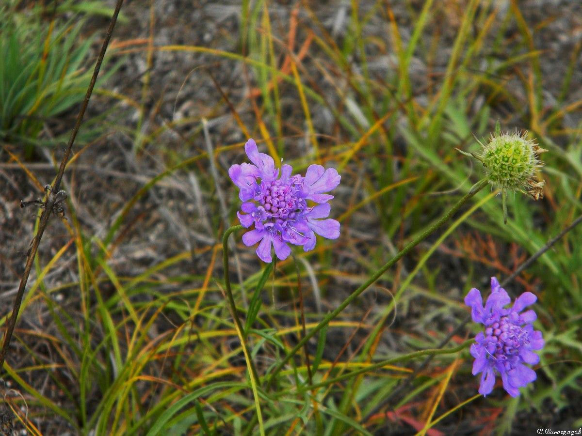 Синий цветок в лесу