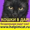 Кошки и собаки в дар! Москва