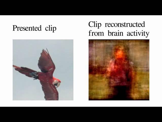Movie reconstruction from human brain activity