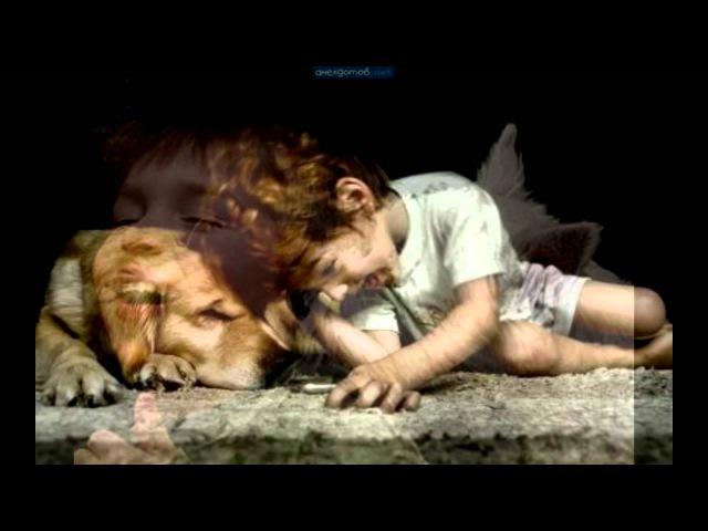 Пропала собака по кличке Люси.mp4