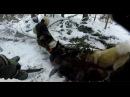 Охота на кабана с собаками зарезал ножом