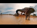 Elephants on the Brink 360 Video