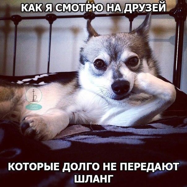#Йошка #кальян