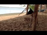 Shri-Lanka 2015 Kalpitiya Romashki