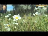 ФРАНЦ ШУБЕРТ - Соната для скрипки ля мажор, D. 574, Скерцо. (Franz Schubert)