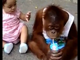 Смешные видео. Приколы. Подборка смешных видео. Дети и животные - Funny videos. Best Babies and Anim