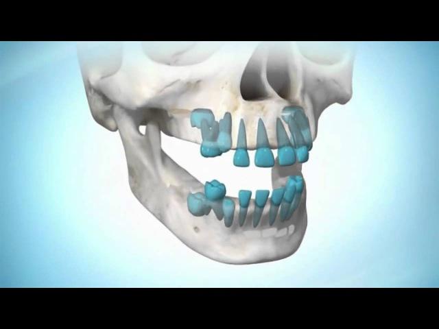 Практика - регенерации новых, молодых зубов