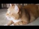 Как поют собаки и кошки - Забавные видео про животных
