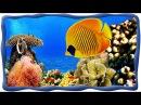 Морские рыбки Подводный мир Осминог скат акула рыба лягушка спинорог Пикасс