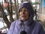 Утиные истории: в Кировск и Апатиты прилетели дикие птицы