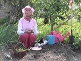 Как удобрять почву на грядке для огурцов