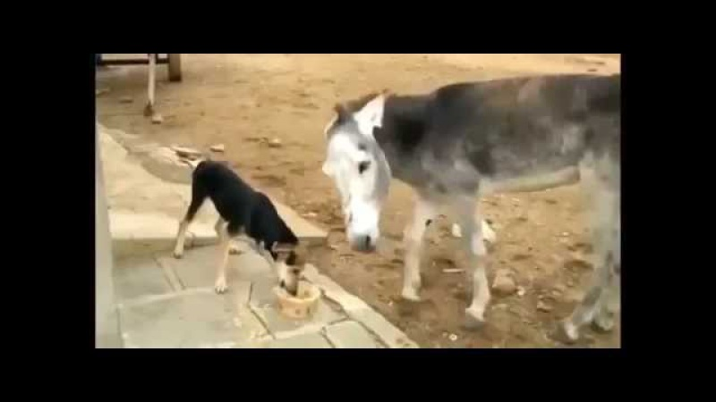 Осел дзюдоист и собака приколы 2015 драка животных интим 18 малолетки пьяные алкаши драка бомжей