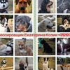 Дрессировка собак в Витебске