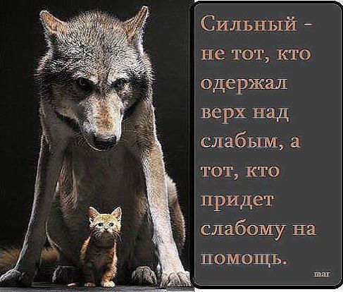 http://cs624820.vk.me/v624820277/8d99/UwMZYs_TJSI.jpg