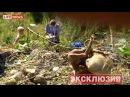 248 мертвых младенцев нашли в лесу