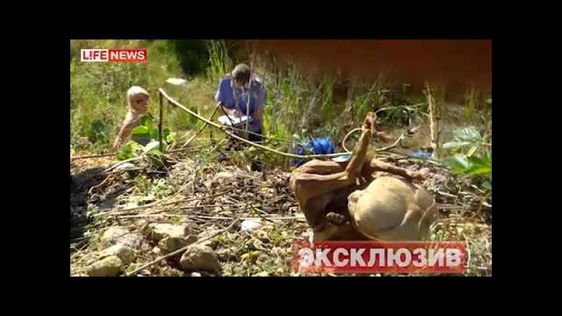ДАТА СЪЕМКИ 23.07.2012 248 мертвых младенцев нашли в лесу