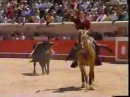 Мерлин, лошадь лузитанской породы