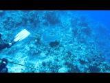 Специалисты НАУЧИЛИ АКУЛ охотиться на рыбу-зебру - эксперимент в Карибском море!