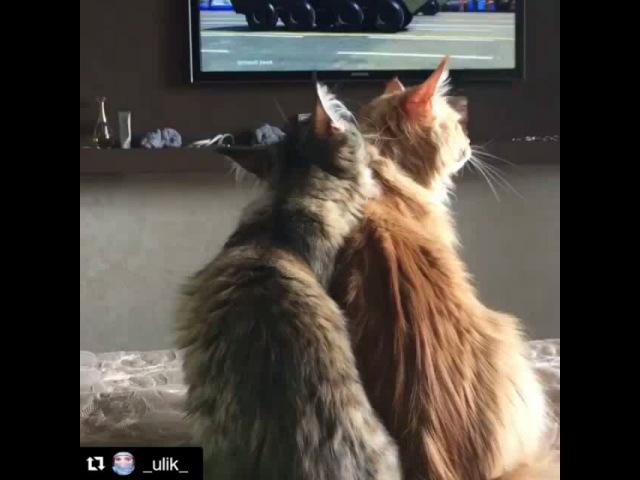 "Oksana Ashikhmina Apollo Pride on Instagram: ""Ну до чего же кунытакие куны. Сидят девушки, парад смотрят. У Янки вдруг возник приступ любви к старшей сестре. Да и Соната , вроде не…"""