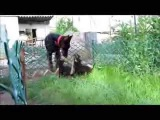 Пражские крысарики 2 мес помет В и доберман 2