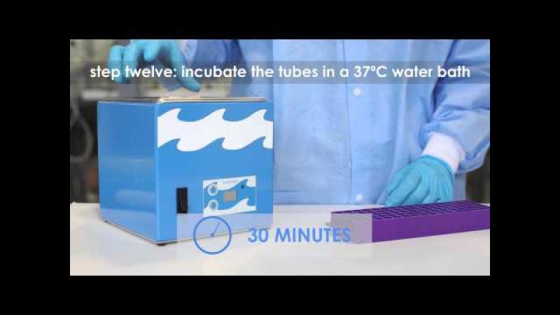 Transformation of E coli with Plasmid DNA Edvotek Video Tutorial