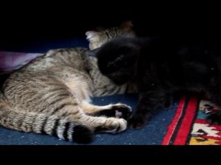 веселые бои. Котята. kittens