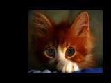 ВЯЧЕСЛАВ БУТУСОВ и DEADУШКИ- Кошка,чашка,муха и лапоть.wmv
