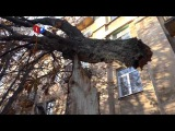 19 суток сломанное ураганом дерево угрожает пешеходам и автомобилям в Мариуполе 13.10.2014