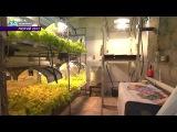 Промышленная гидропоника  Industrial hydroponics ENG Subtitles