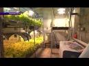 Промышленная гидропоника | Industrial hydroponics [ENG Subtitles]