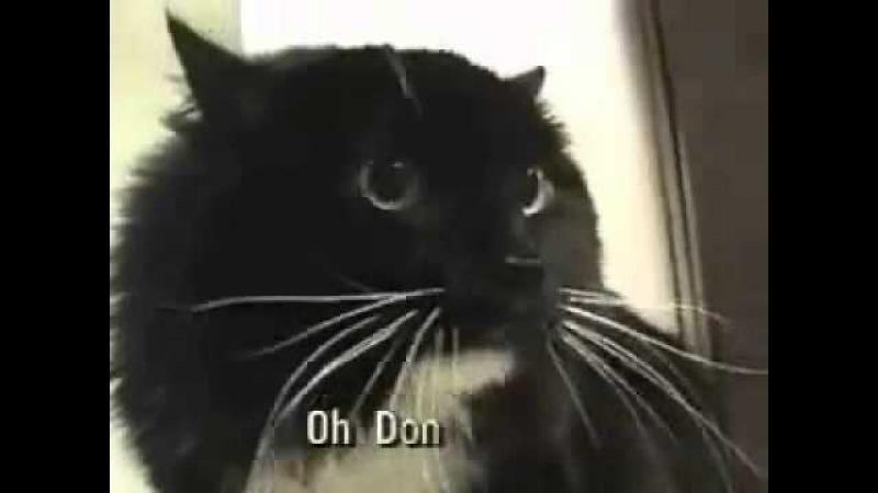 Talking cat! Oh Long Johnson... :)