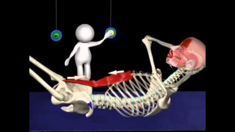 Мышцы живота и таза - осознать