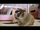 Лори - самое милое животное в мире