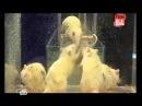 Ген всевластия Эксперименты с крысами Дидье Дезора