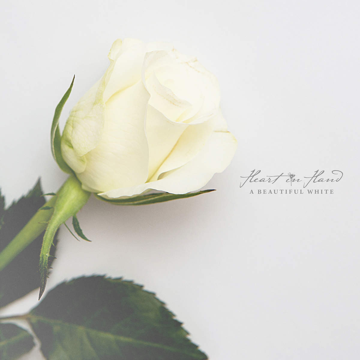 Heart In Hand - A Beautiful White [Full Album Preview] (2014)