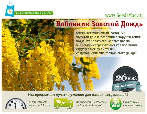 Http seedsmag ru productinfo php info p394bobovni