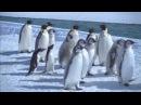 Королевство океанов 2011. Фильм Четвёртый.