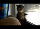 Кот повторяет