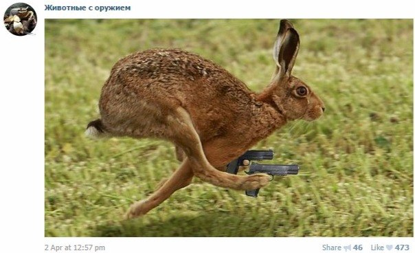 животные с оружием