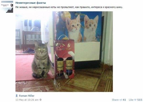 коты и вино