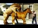 ТОП 5 Ужасные СПАРИВАНИЯ Животных в Сравнении с Человеком !