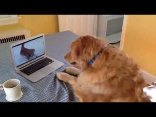 Это надо знать! ИНТЕРЕСНЫЕ факты о собаках L_0bea0124