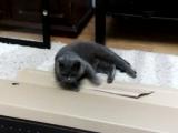 Мебель из ИКЕА - радость кошке
