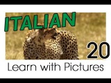 Learn Italian - Italian Safari Animals Vocabulary