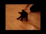 Future SpaceDog собака-космонавт (Franch Buldog - Ar4ibald)