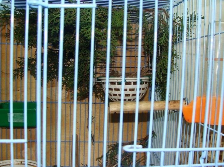 """Фотографии """"птичей комнаты""""  EW2vBq9MT9Q"""