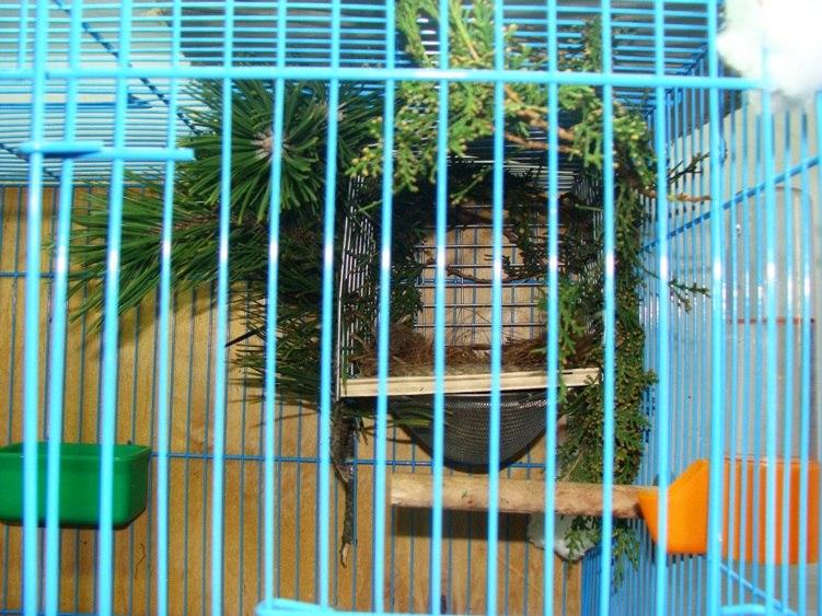"Фотографии ""птичей комнаты""  KdfO4LXMIgY"