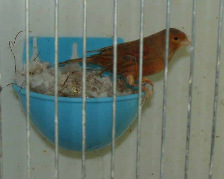 """Фотографии """"птичей комнаты""""  C_apR1x2C20"""